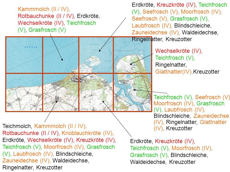 Erdkröte, Kreuzkröte (IV), Teichfrosch (V), Seefrosch (V), Moorfrosch (IV), Seefrosch (V), Grasfrosch (V), Laubfrosch (IV), Blindschleiche, Zauneidechse (IV), Waldeidechse, Ringelnatter, Kreuzotter