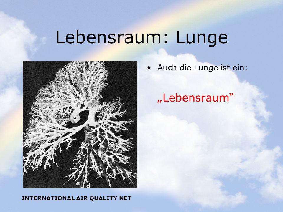 """Lebensraum: Lunge """"Lebensraum Auch die Lunge ist ein:"""