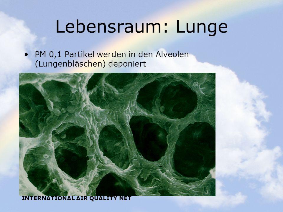 Lebensraum: Lunge PM 0,1 Partikel werden in den Alveolen (Lungenbläschen) deponiert.