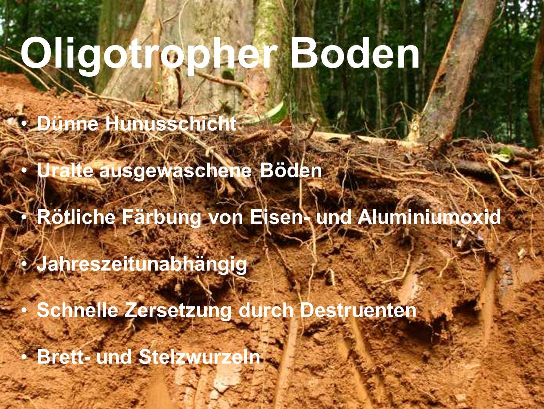 Oligotropher Boden Dünne Hunusschicht Uralte ausgewaschene Böden