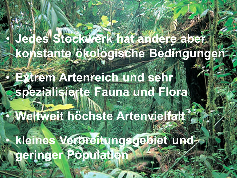 Jedes Stockwerk hat andere aber konstante ökologische Bedingungen