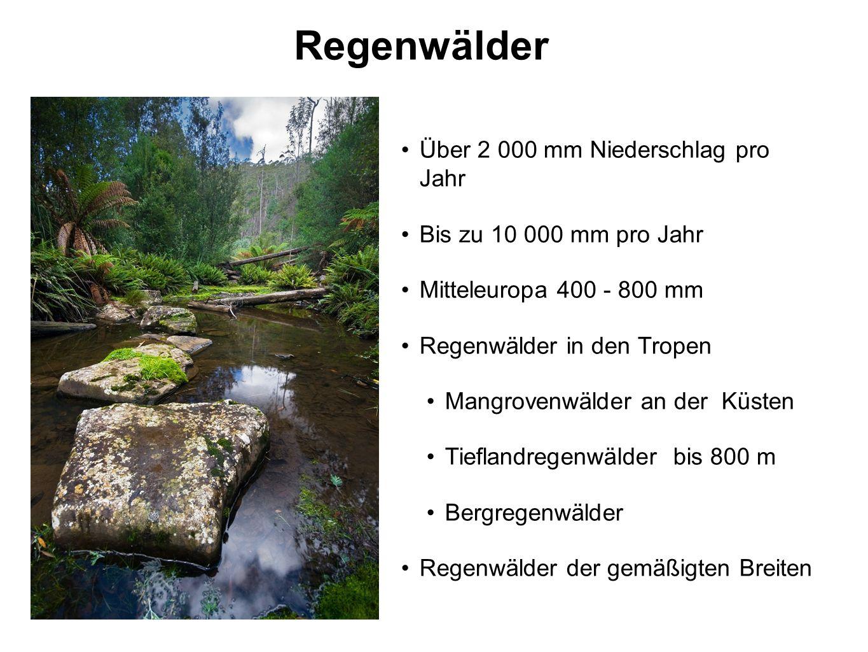 Regenwälder Über 2 000 mm Niederschlag pro Jahr