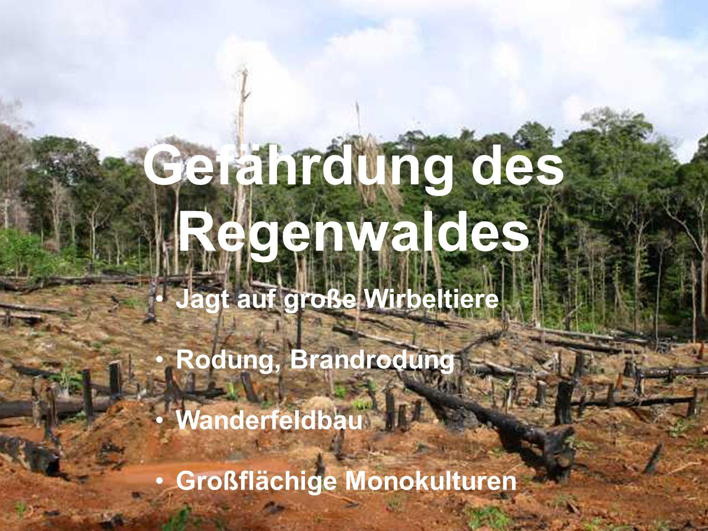 Gefährdung des Regenwaldes