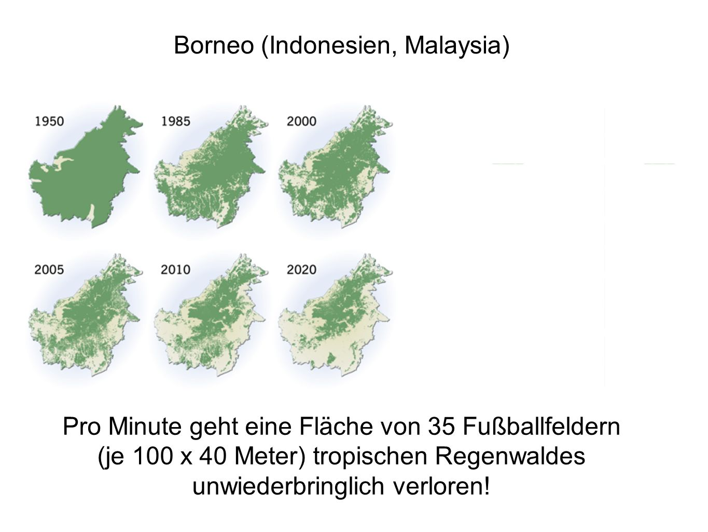 Borneo (Indonesien, Malaysia)