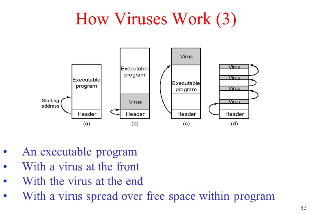 How Viruses Work (3) An executable program With a virus at the front