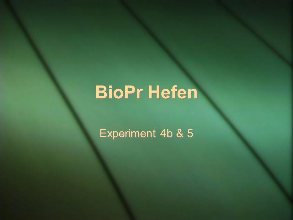 BioPr Hefen Experiment 4b & 5