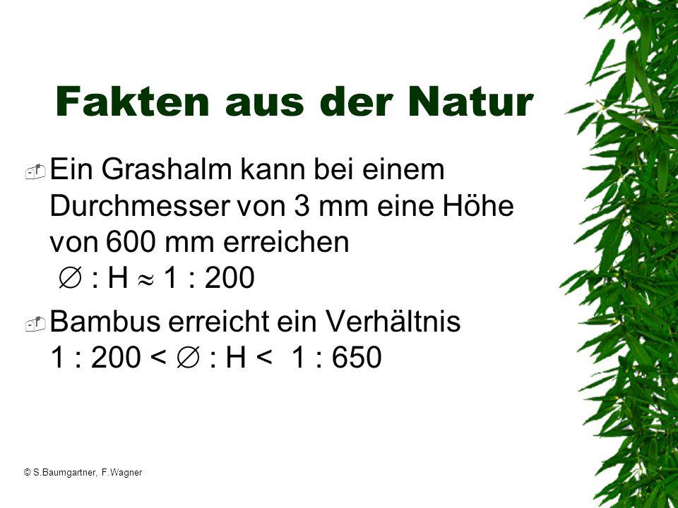 Fakten aus der Natur Ein Grashalm kann bei einem Durchmesser von 3 mm eine Höhe von 600 mm erreichen  : H  1 : 200.