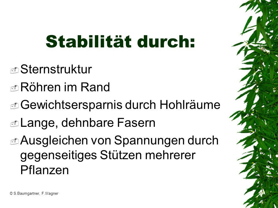 Stabilität durch: Sternstruktur Röhren im Rand
