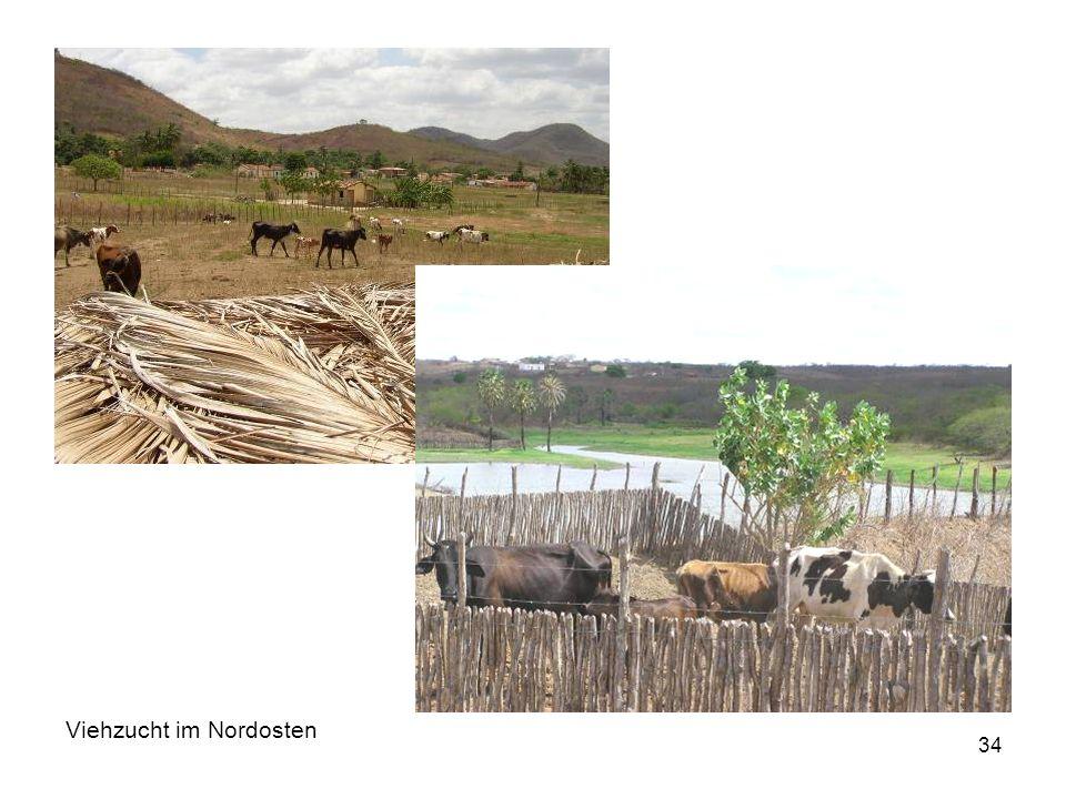 Viehzucht im Nordosten
