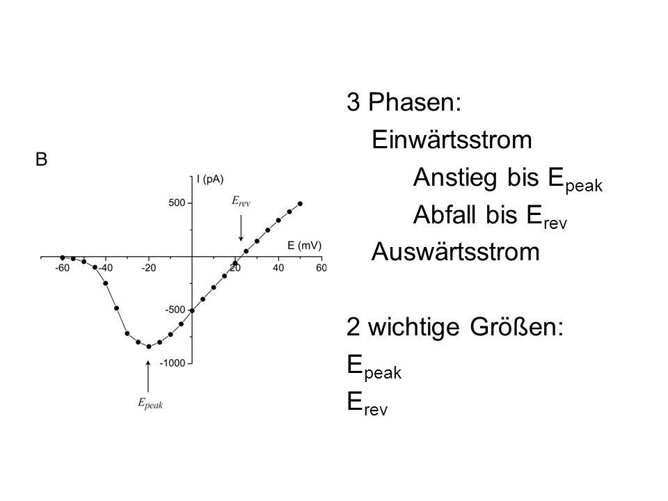 3 Phasen: Einwärtsstrom. Anstieg bis Epeak. Abfall bis Erev. Auswärtsstrom. 2 wichtige Größen: Epeak.