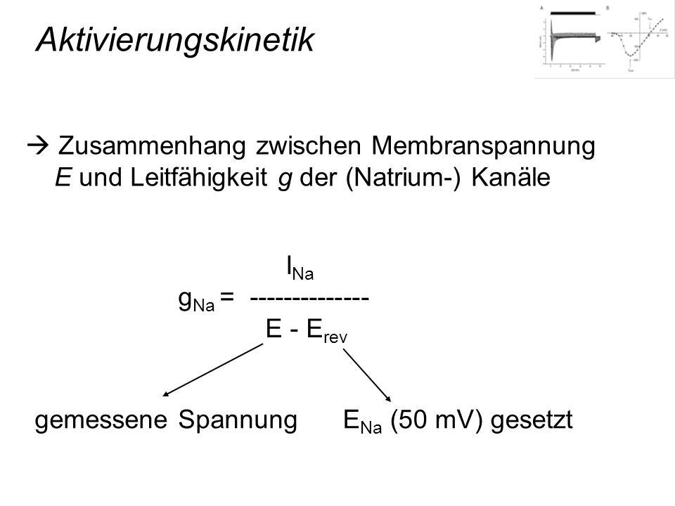 Aktivierungskinetik  Zusammenhang zwischen Membranspannung E und Leitfähigkeit g der (Natrium-) Kanäle.