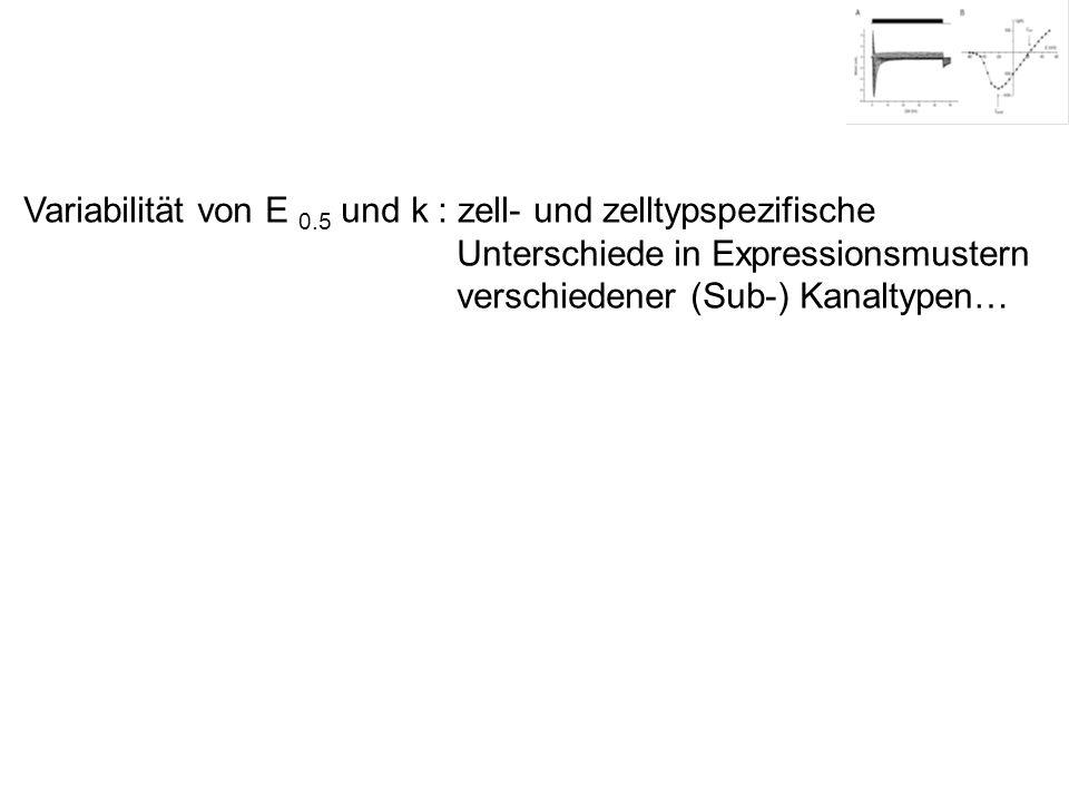 Variabilität von E 0.5 und k : zell- und zelltypspezifische Unterschiede in Expressionsmustern verschiedener (Sub-) Kanaltypen…