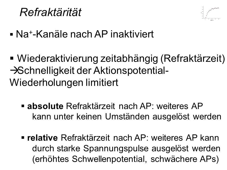 Refraktärität Wiederaktivierung zeitabhängig (Refraktärzeit)