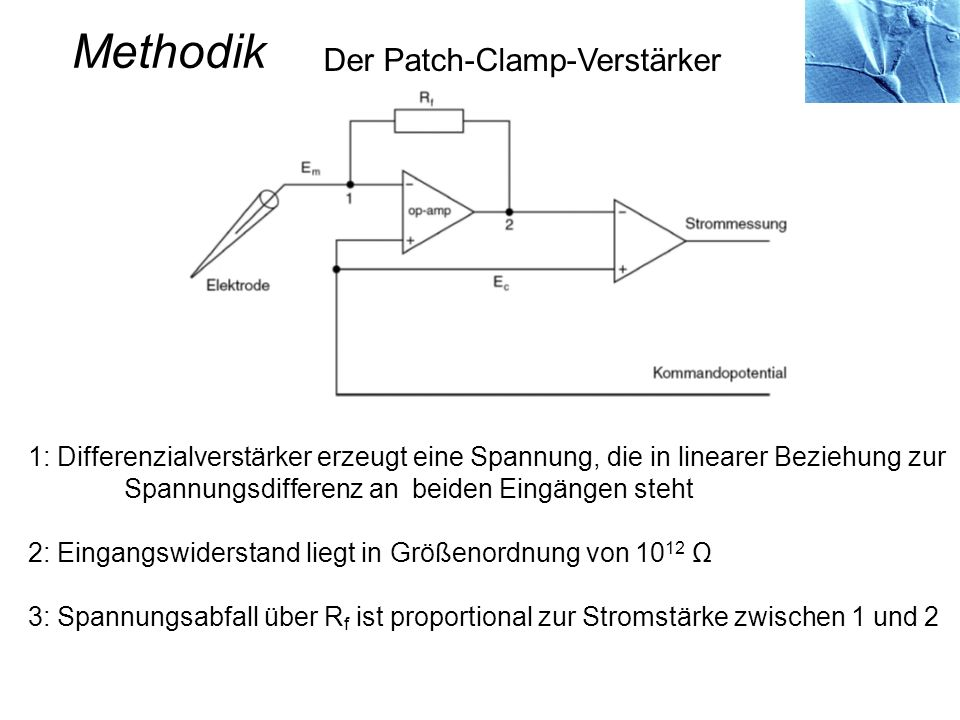 Methodik Der Patch-Clamp-Verstärker