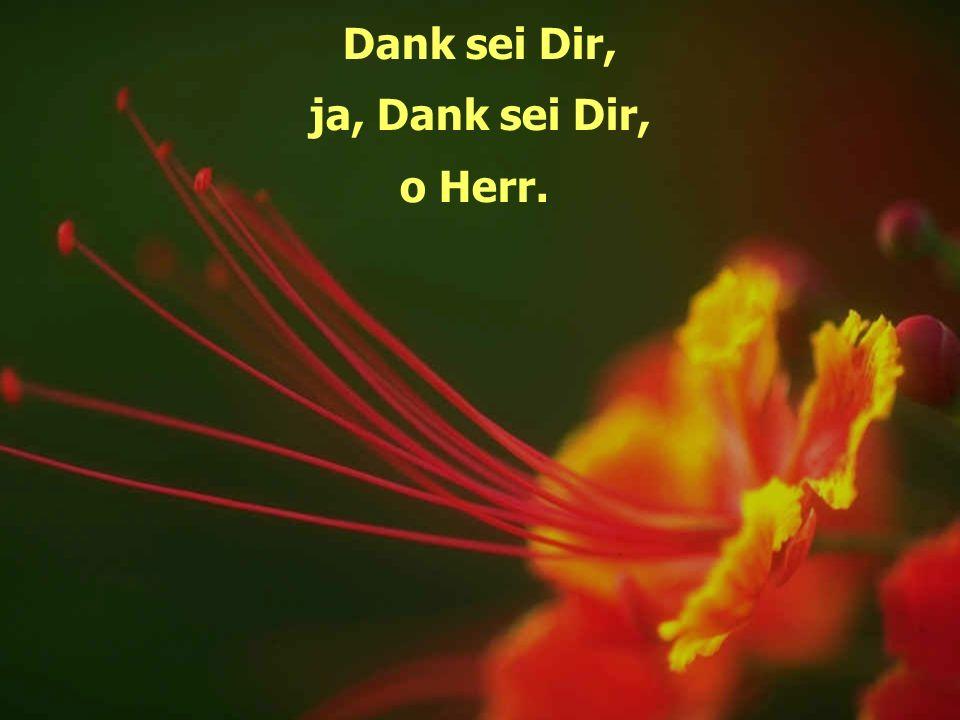 Dank sei Dir, ja, Dank sei Dir, o Herr.