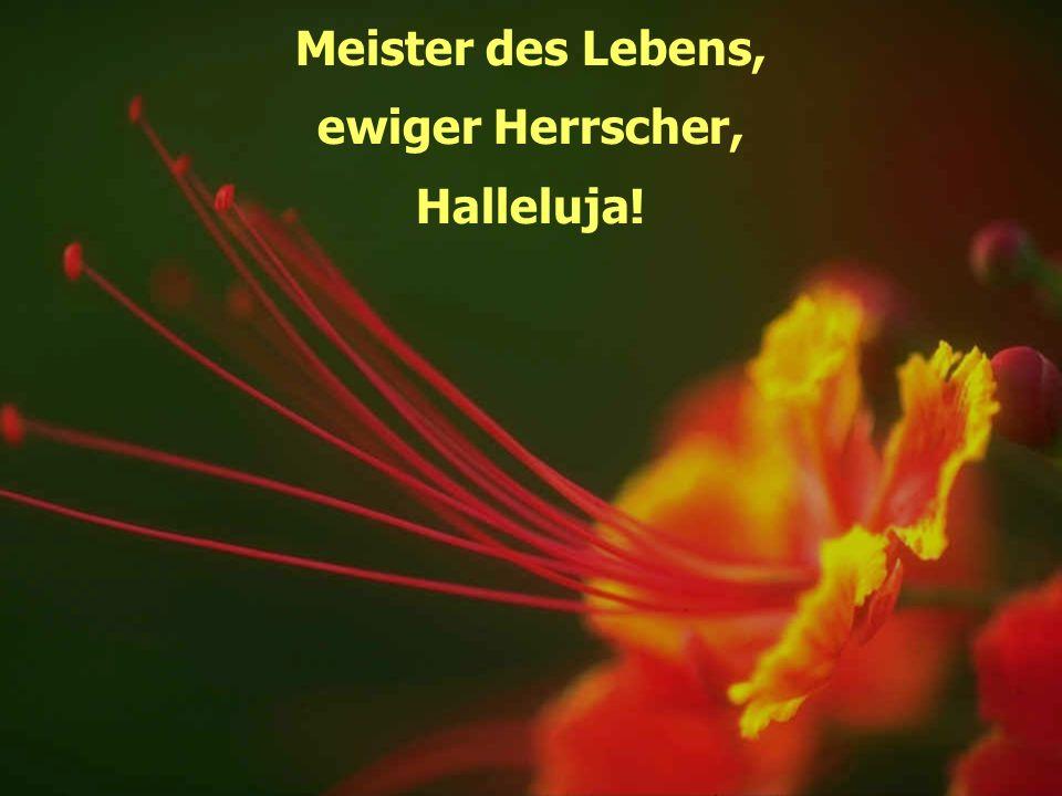 Meister des Lebens, ewiger Herrscher, Halleluja!