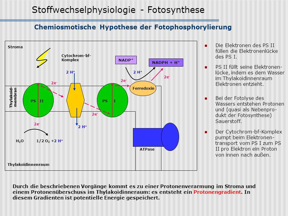 Chemiosmotische Hypothese der Fotophosphorylierung