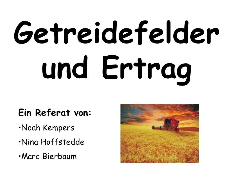 Getreidefelder und Ertrag