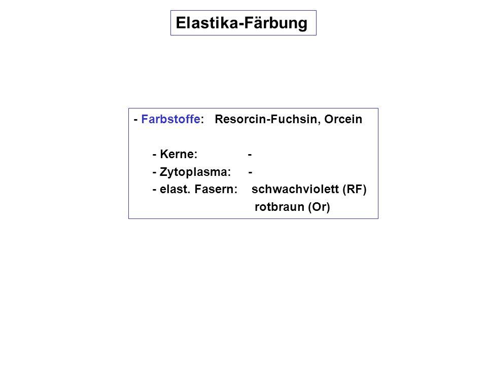 Elastika-Färbung - Farbstoffe: Resorcin-Fuchsin, Orcein - Kerne: -