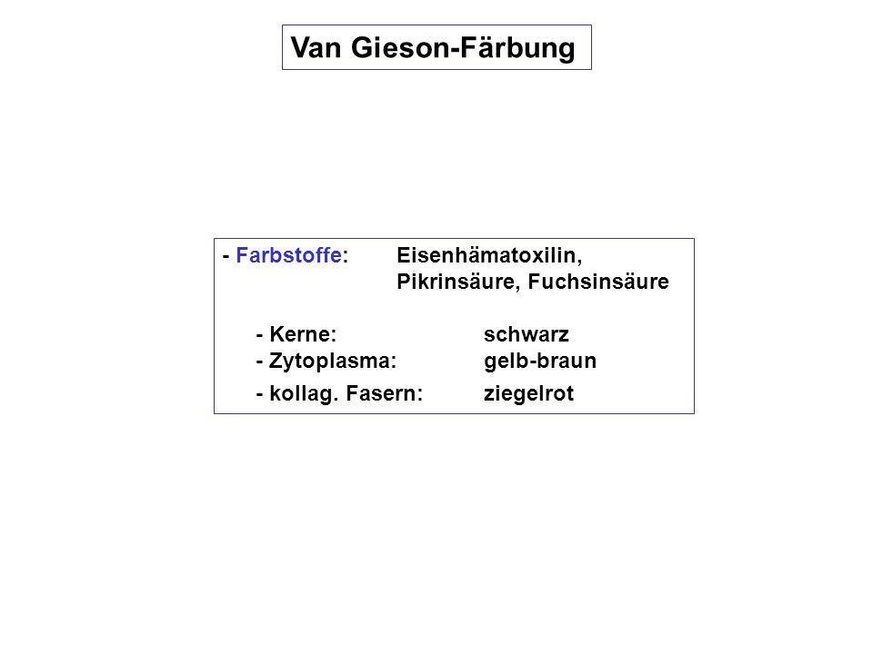 Van Gieson-Färbung - Farbstoffe: Eisenhämatoxilin, Pikrinsäure, Fuchsinsäure. - Kerne: schwarz.