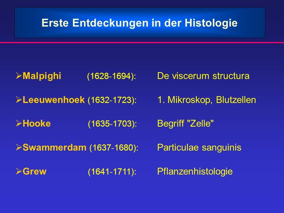 Erste Entdeckungen in der Histologie