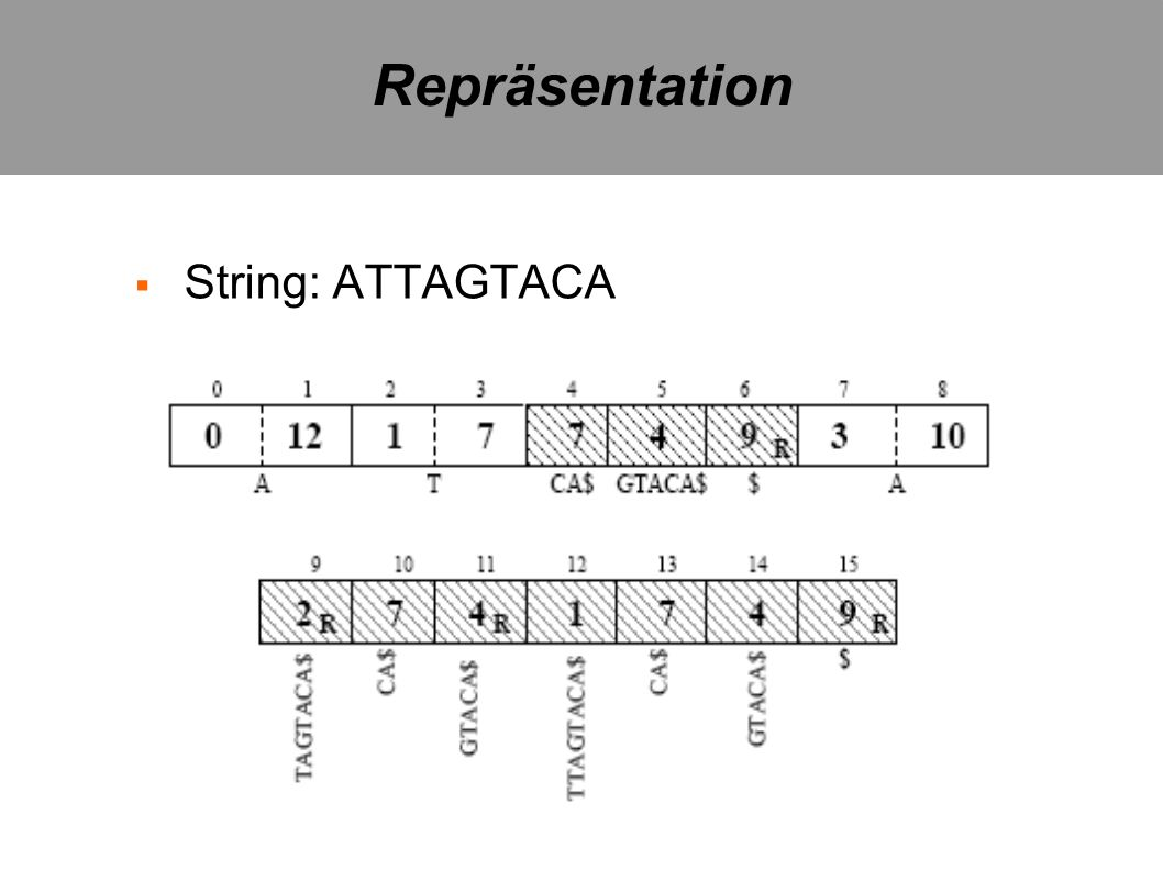 Repräsentation String: ATTAGTACA