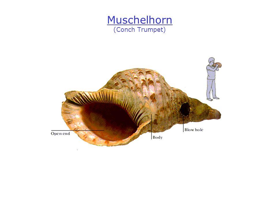 Muschelhorn (Conch Trumpet)