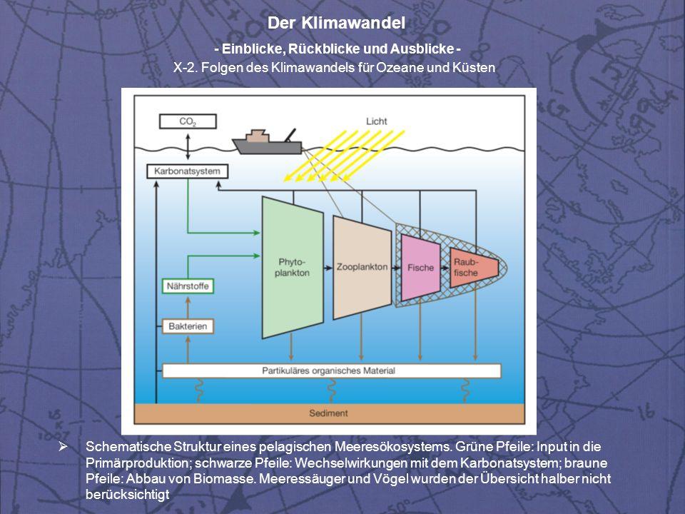 Schematische Struktur eines pelagischen Meeresökosystems