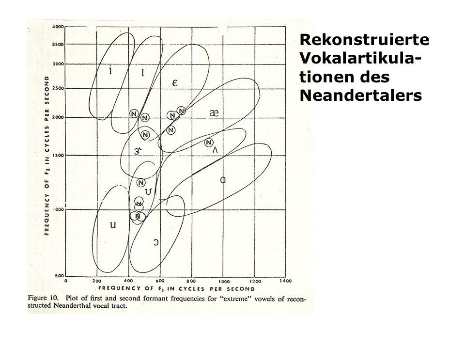 Rekonstruierte Vokalartikula-tionen des Neandertalers