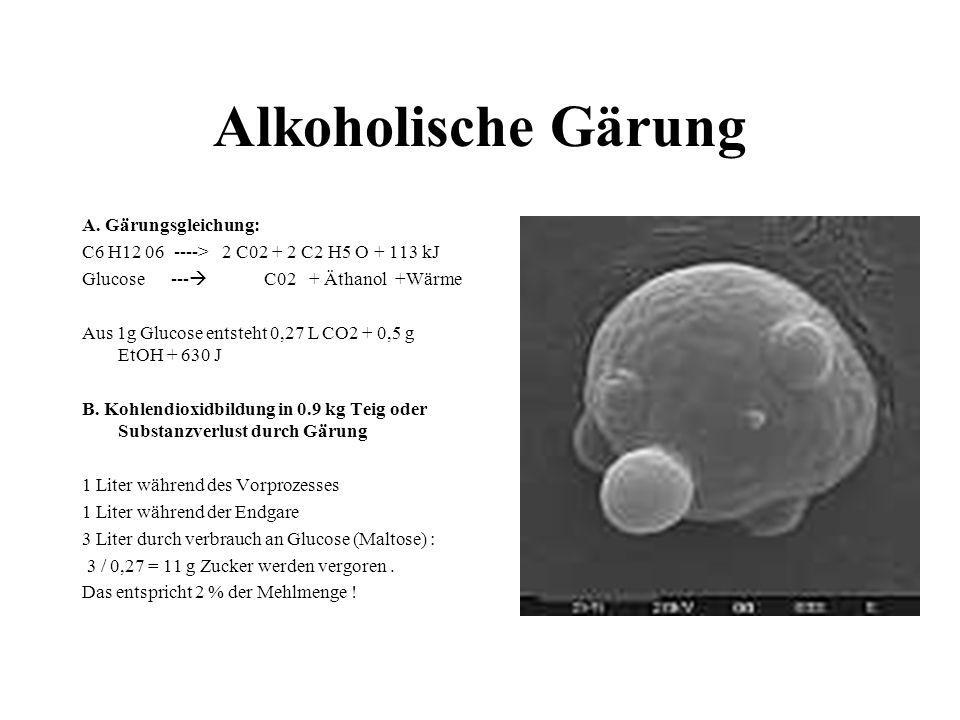 Alkoholische Gärung A. Gärungsgleichung:
