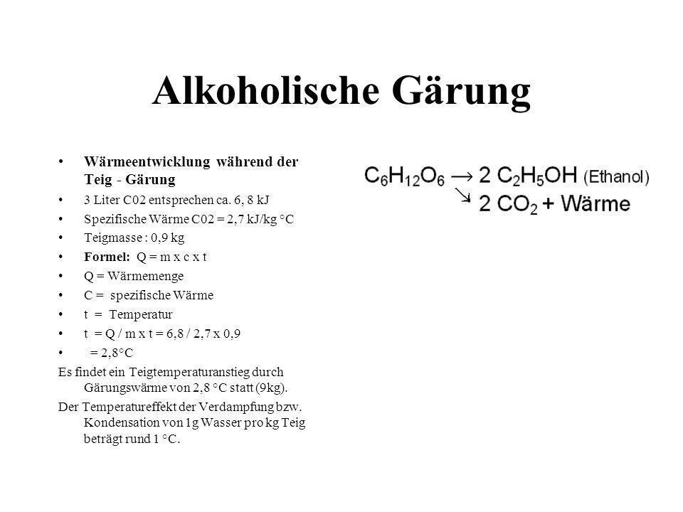 Alkoholische Gärung : 31,0 °C