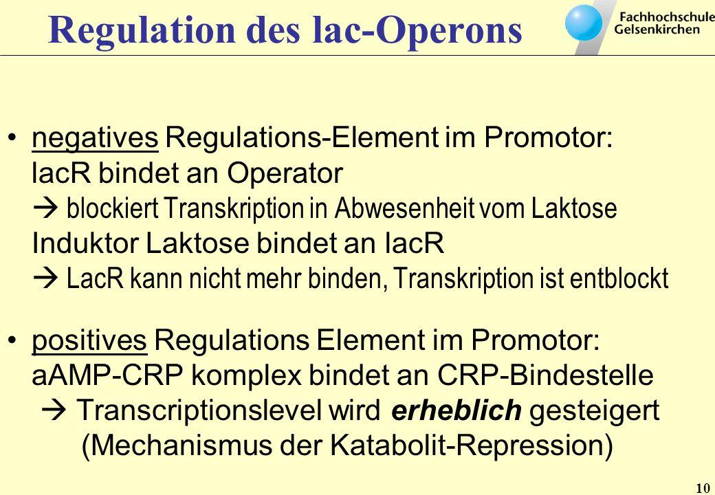 Regulation des lac-Operons