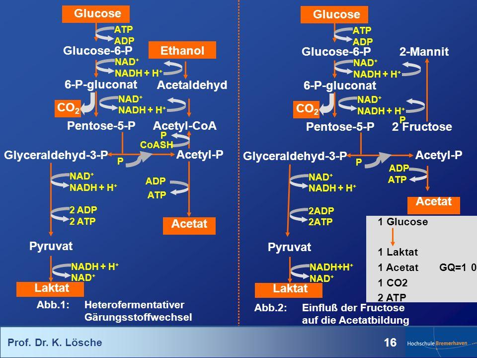 Glucose Glucose Glucose-6-P Ethanol Glucose-6-P 2-Mannit 6-P-gluconat