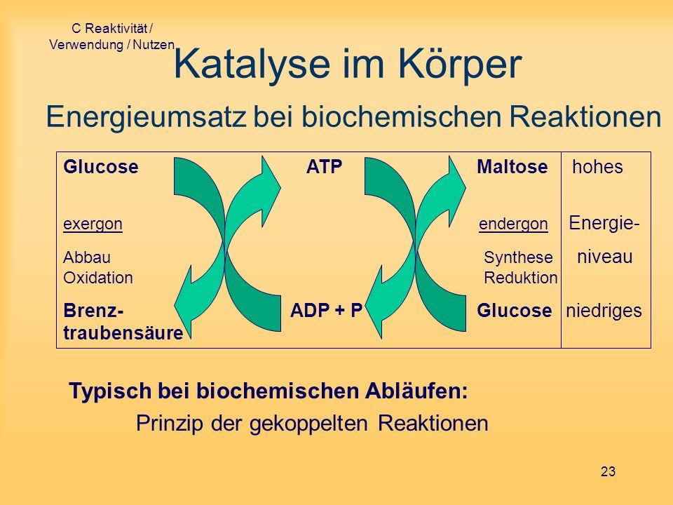 Katalyse im Körper Energieumsatz bei biochemischen Reaktionen