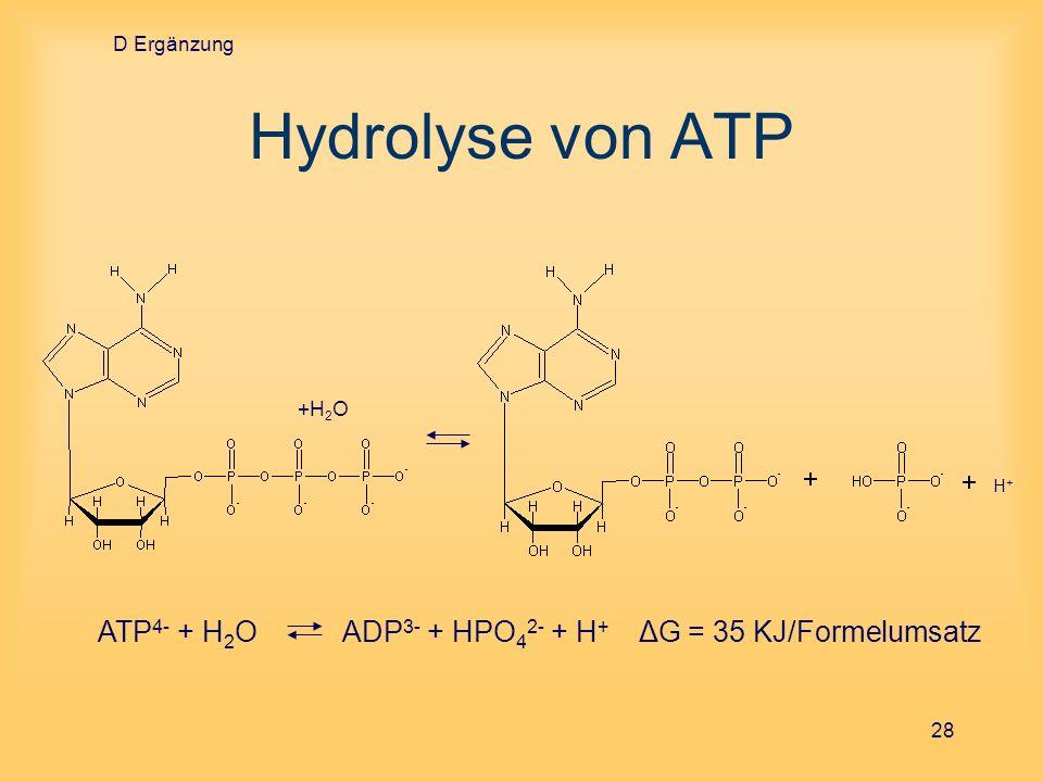 D ErgänzungHydrolyse von ATP.+H2O.