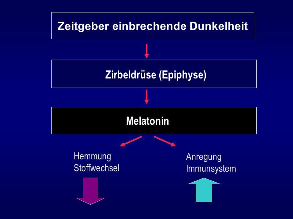 Zeitgeber einbrechende Dunkelheit Zirbeldrüse (Epiphyse)