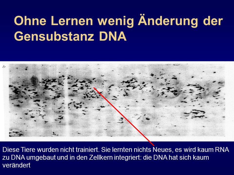 Ohne Lernen wenig Änderung der Gensubstanz DNA