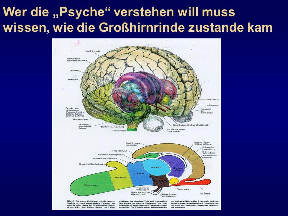 """Wer die """"Psyche verstehen will muss wissen, wie die Großhirnrinde zustande kam"""
