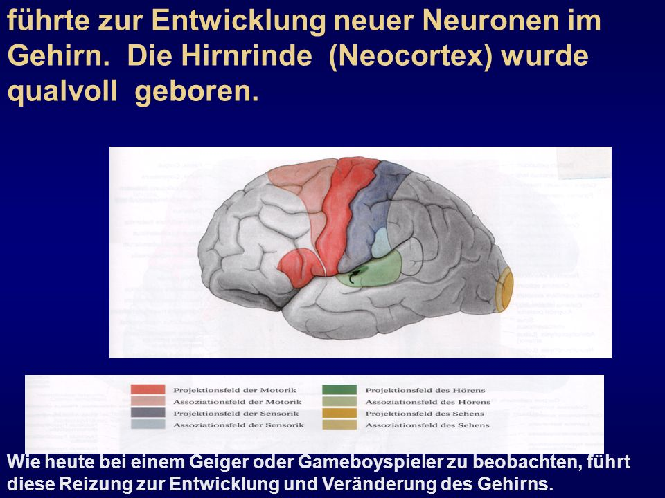 Die Arbeit war ein Reiz für das Gehirn und führte zur Entwicklung neuer Neuronen im Gehirn. Die Hirnrinde (Neocortex) wurde qualvoll geboren.