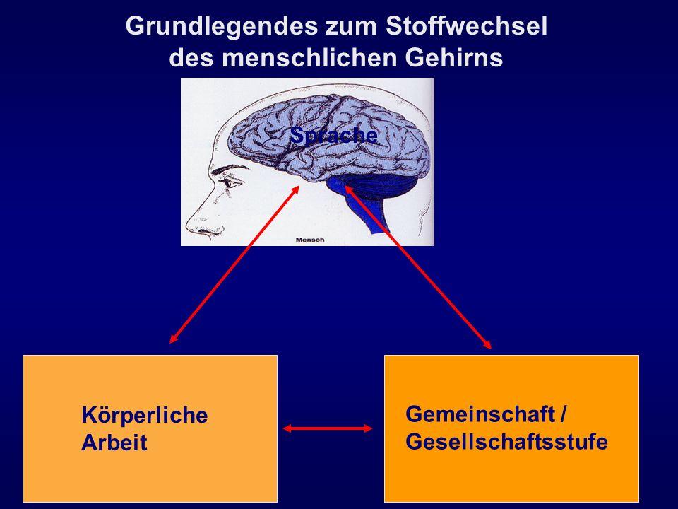 Grundlegendes zum Stoffwechsel des menschlichen Gehirns