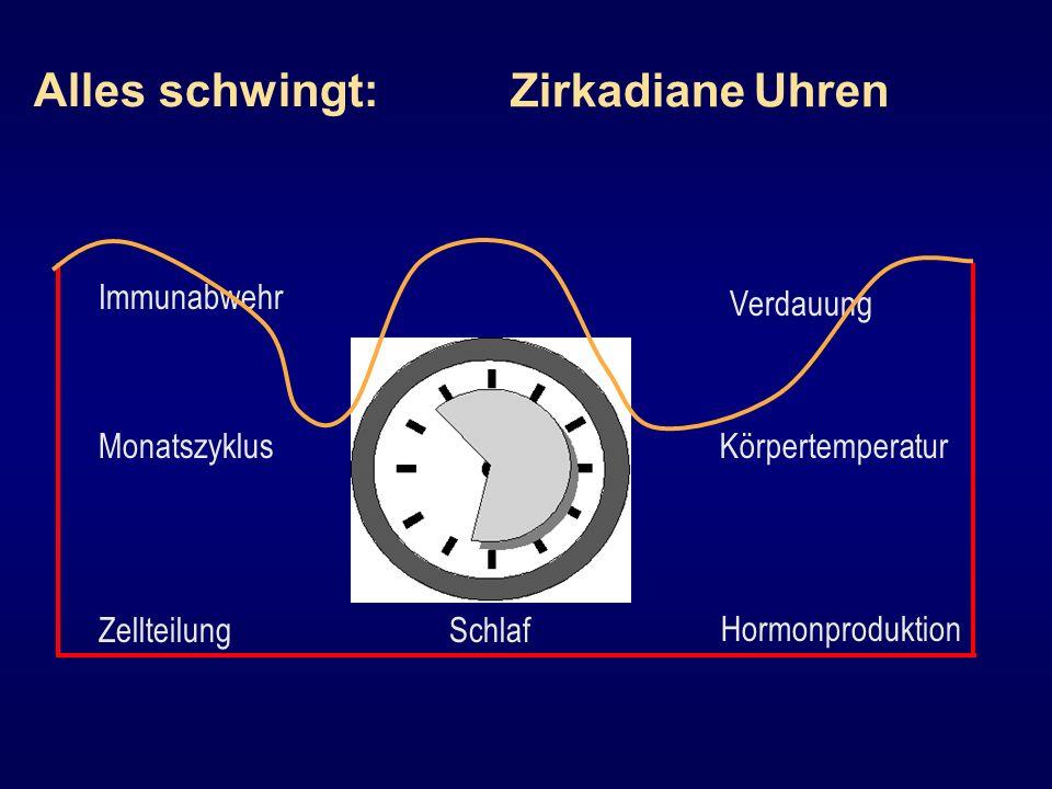 Alles schwingt: Zirkadiane Uhren Immunabwehr Verdauung Monatszyklus