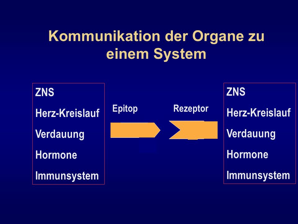 Kommunikation der Organe zu einem System