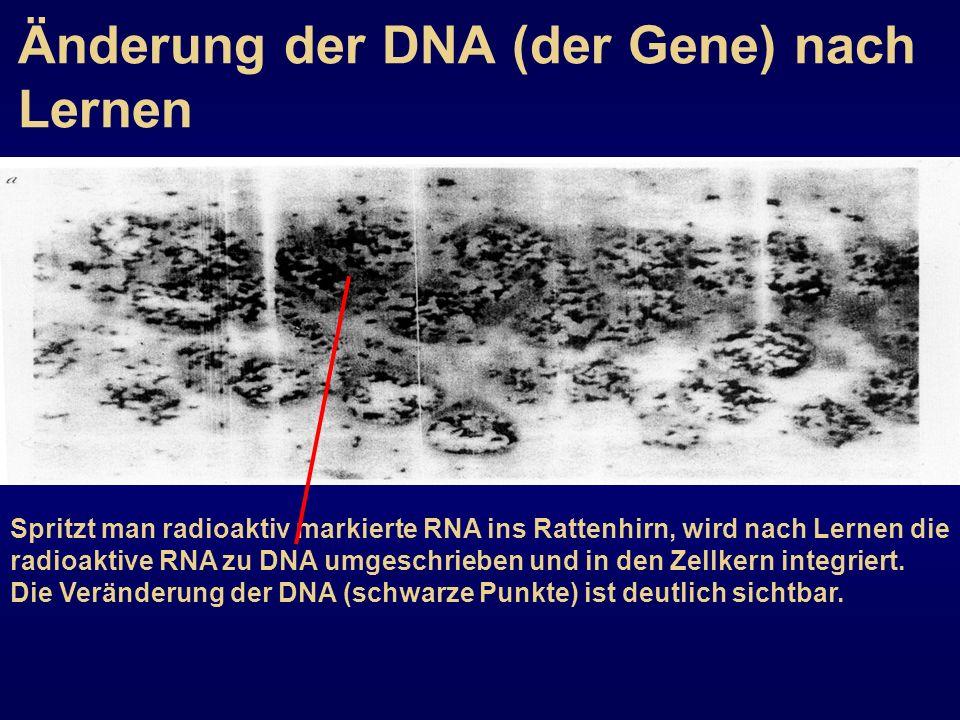 Änderung der DNA (der Gene) nach Lernen