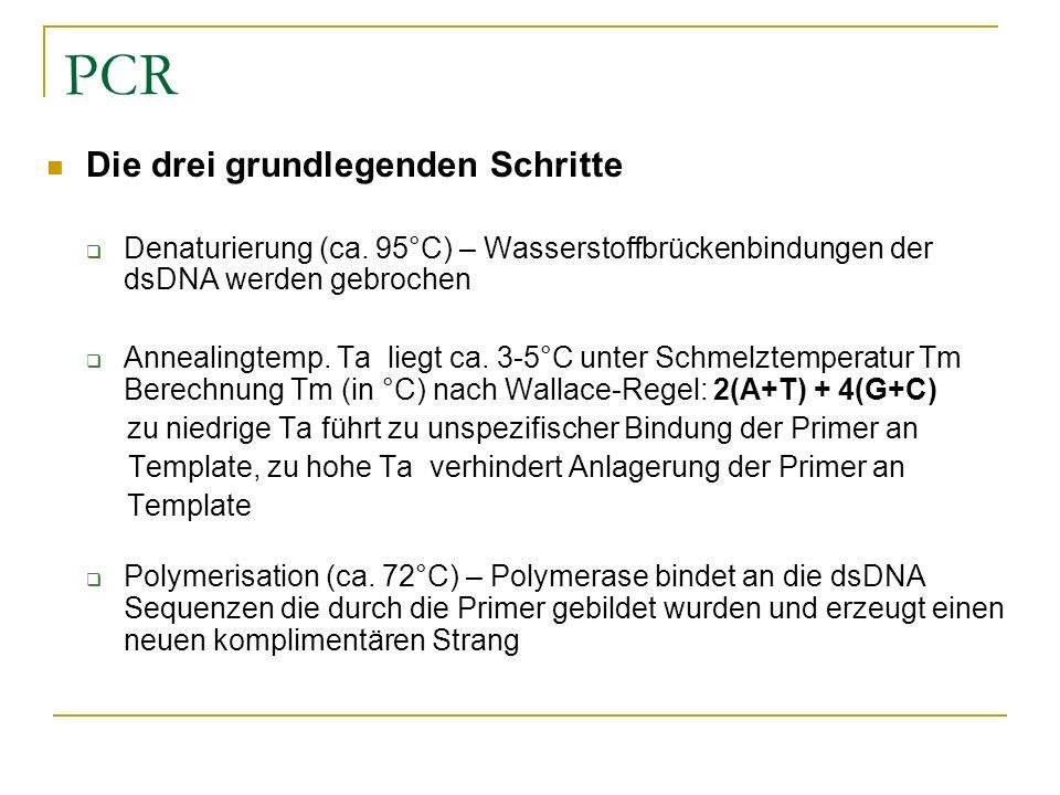 Schön Grundlegende Wiederaufnahme Schritte Galerie - Beispiel ...
