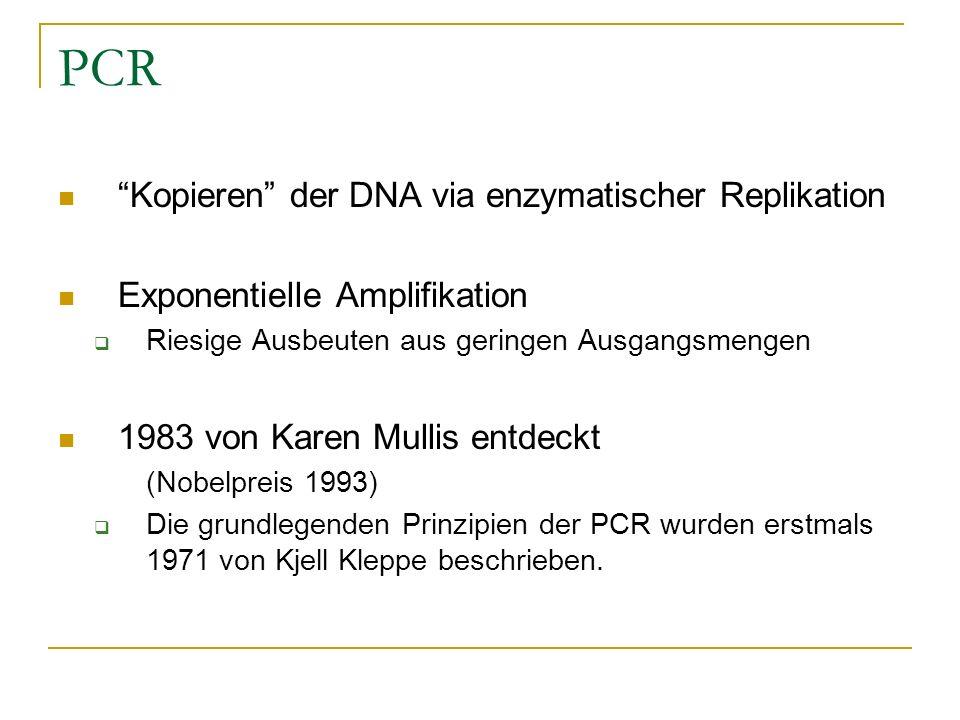 PCR Kopieren der DNA via enzymatischer Replikation