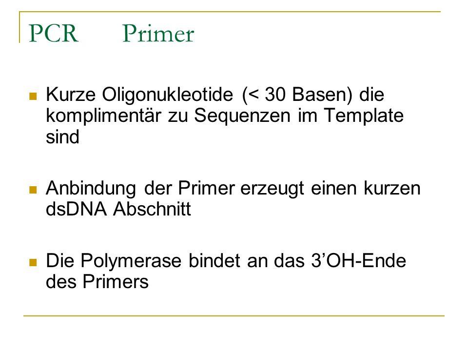 PCR Primer Kurze Oligonukleotide (< 30 Basen) die komplimentär zu Sequenzen im Template sind.