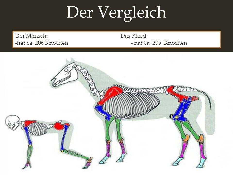 Der Vergleich Der Mensch: Das Pferd: