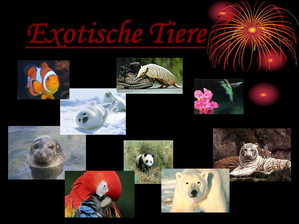 Exotische Tiere