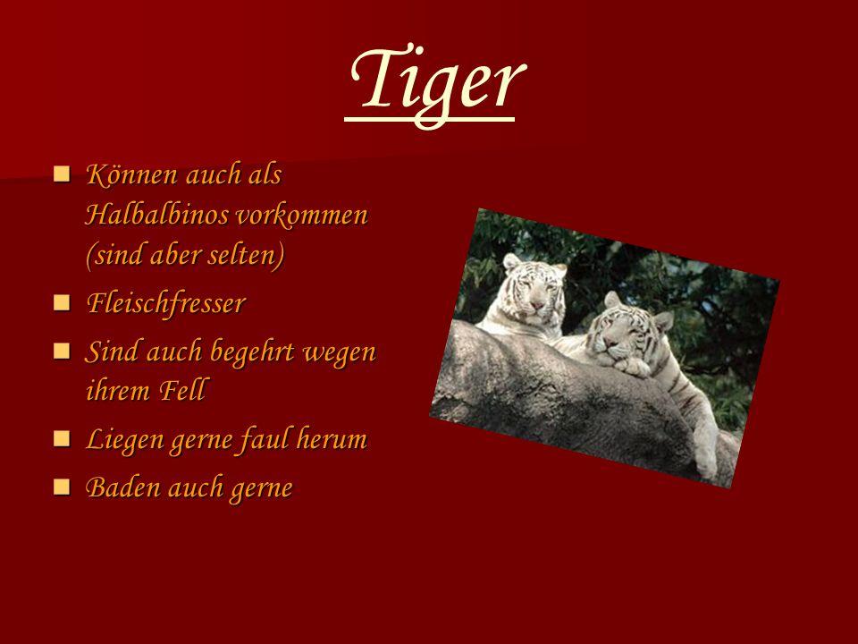 Tiger Können auch als Halbalbinos vorkommen (sind aber selten)