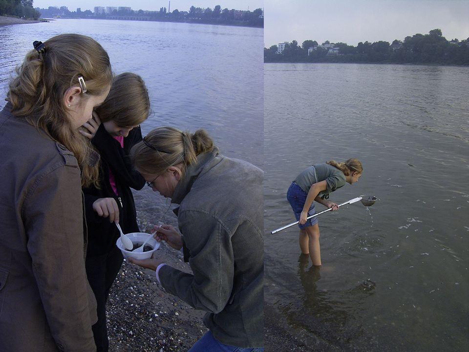 Projekt Multiculti im Rhein